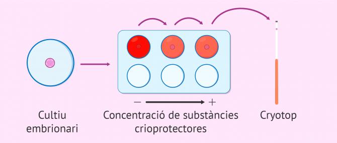 Imagen: Deshidratació dels embrions per a vitrificar