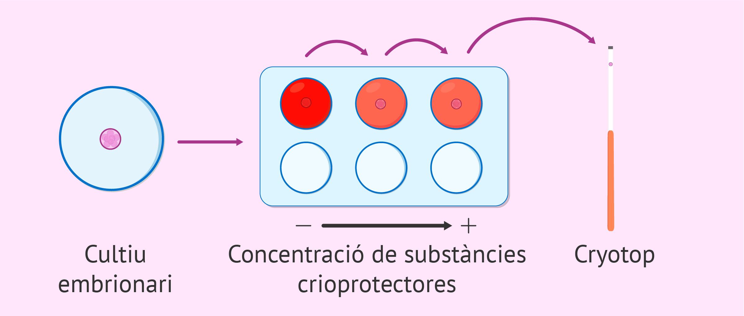 Deshidratació dels embrions per a vitrificar