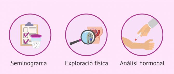 Imagen: Probes bàsiques de fertilitat masculina