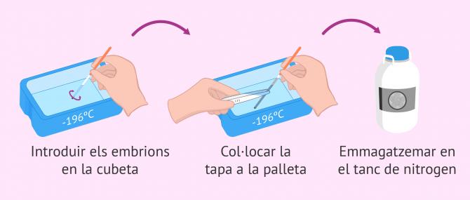 Imagen: Vitrificació dels embrions a -196 °C