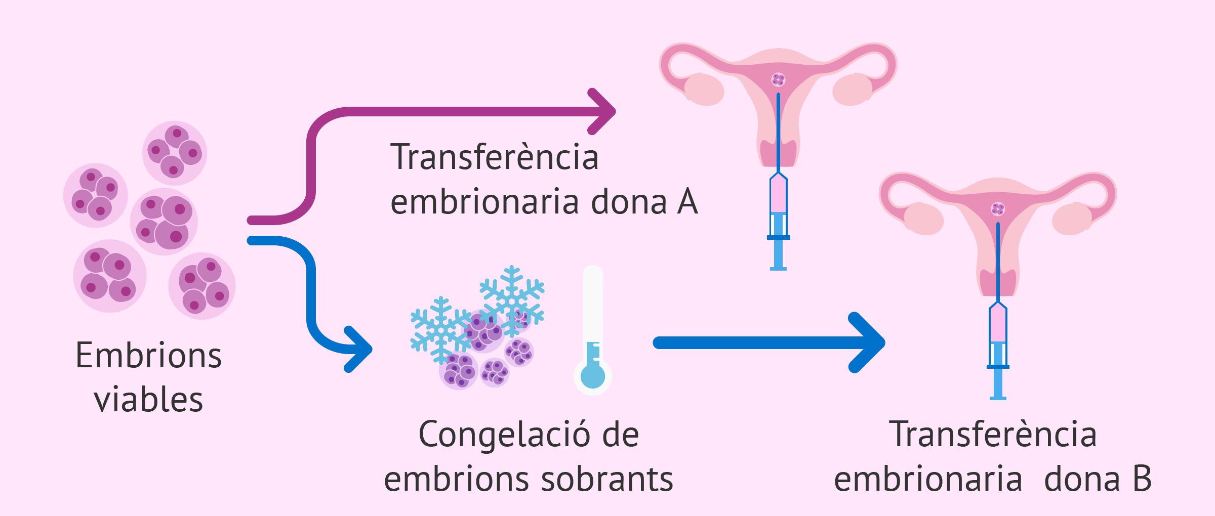 És el mateix la donació que l'adopció d'embrions?